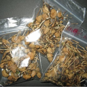 buy shrooms online usa